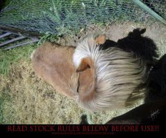 Unusual Angle 03 Pony by AstriexEquineStock