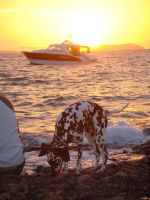 Dalmation Sunset in Ibiza by bowlandspoon