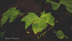 The-leaves by fotoponono