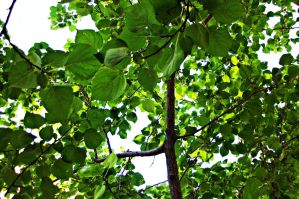 green branches by ANDMAiYESi1986