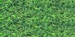 Lush lawn grass with chickweed and dry leaves by LilipilySpirit