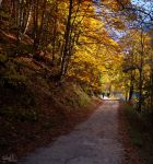 autumn way by MadMike27