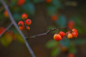 istanti d'autunno 2 by elspeth-66