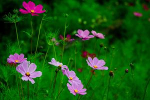 Pink and green by zzha158