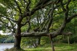 Twisted Oak Tree Stock.. by AledJonesStockNArt