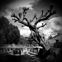 Broxbourne: Tree+Weir1 by Coigach