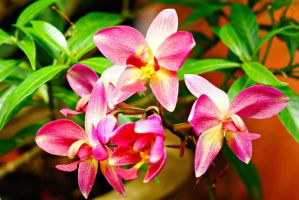 Pink Orchid flower 1 by a6-k