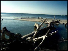 Driftwood Beach5 by sees2moons