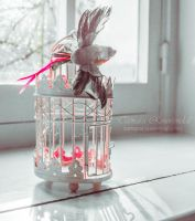 Birdcage by TammyPhotography