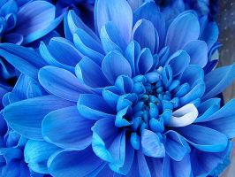 Blue flower by Strofant