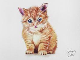 Drawing Animals 1 - A kitty by f-a-d-i-l