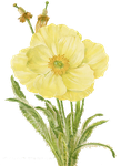 flower png by 384321869