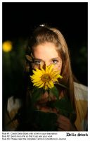 In the Sunflowers.8 by Della-Stock