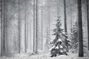 Winter Forest by jjuuhhaa