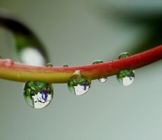More Droplets by duggiehoo