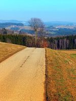 Tree in the middle of the road by patrickjobst