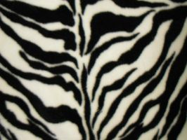 Texture-Zebra 1 by liz-stock