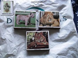 Old Bristol Zoo Match Boxes - Big Cats! by LeoSandra85