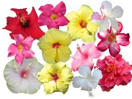 Hawaiian Flowers by jilbert