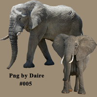 Elephant PNG by DaireGraphique