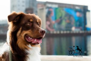 Harbour Front Thor by Whimsydogstudio