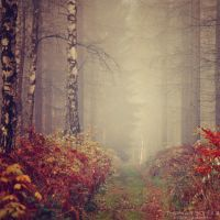 magic forest No.18 by landscapesaxony
