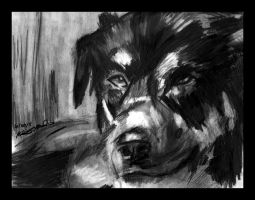 """""""For Amber Black And White"""" by cait-sith28"""