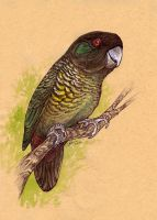 Painted Tiger Parrot by caramitten