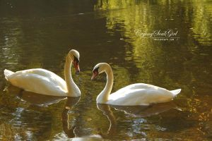Swan. by CryingSoulGirl