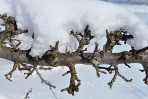 Snowy Barbed Branch by Spritezy