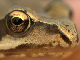 Frog face macro by cathy001