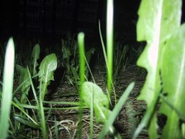 Grass at night by Nemiflora