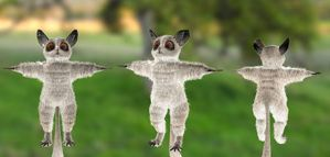 Custom 3D Character Bush Baby by artistsvalley
