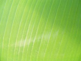Leaf Texture 01 by DKD-Stock