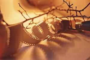 dried branch and spoiled film by KseniaMaytama
