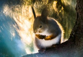 squirrel3 by markotapio