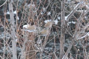 Cold Snowy Day for our Featherd Friends by Razgar