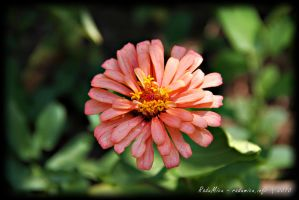Red Petals Flower by Zamolxes