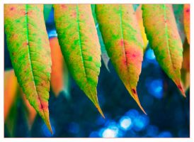 Leaves by morpheusredux