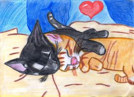 Kitten love by Mart1no777