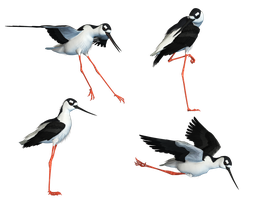 Wading Bird 04 PNG Stock by Roys-Art
