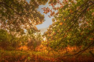 Fall - HDR by xXseadragonXx