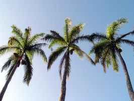 Palms In Hawaii by PiNoYChInO