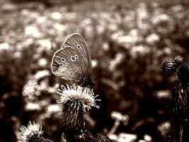 butterfly 2 by Erin666