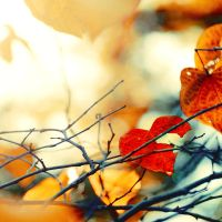 Heartless Autumn by EmiNguyen