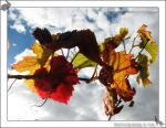 Autumn Colours by 1on3wo1f