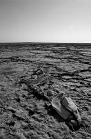 Aral Sea by psychonaute