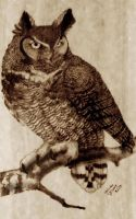 Great Horned Owl - Pyrography by Reviniir