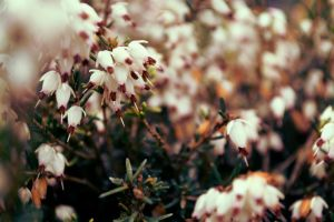 Spring Flora by stefanbottomley