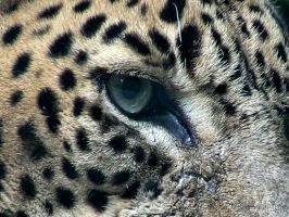 Eye of the jaguar by GoddesOfLiberty